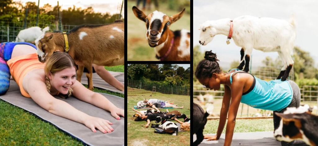 Yoga met dieren