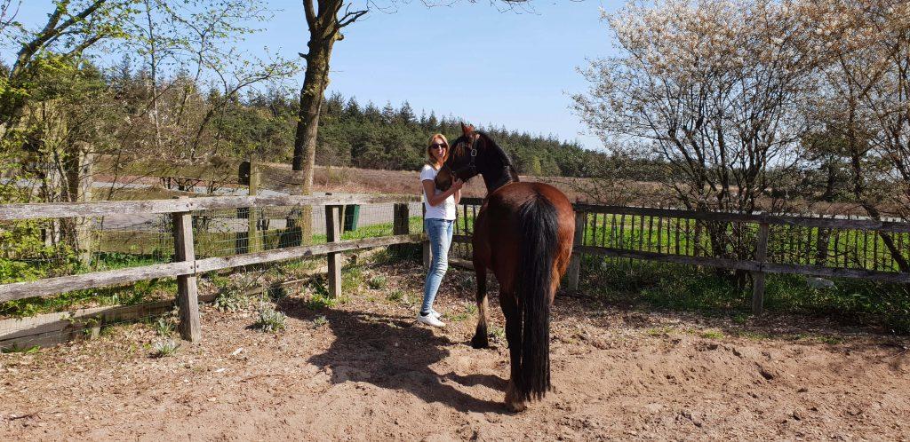 Coaching met paarden op de Veluwe