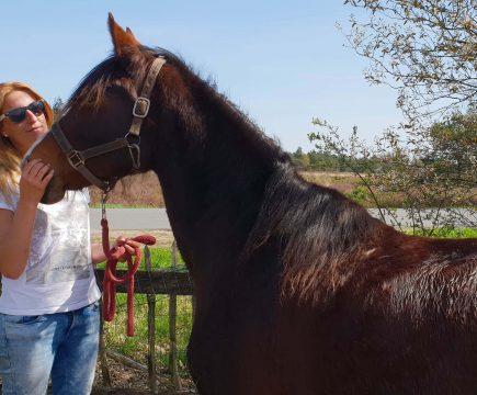 Persoonlijke coaching met paarden in Elspeet, Gelderland
