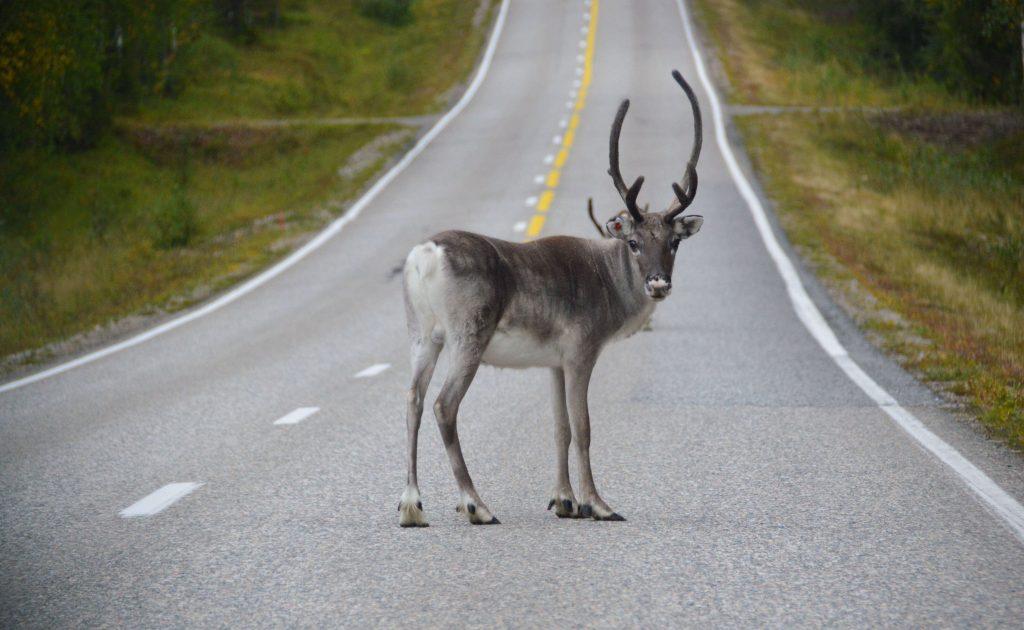 Rendieren in het verkeer