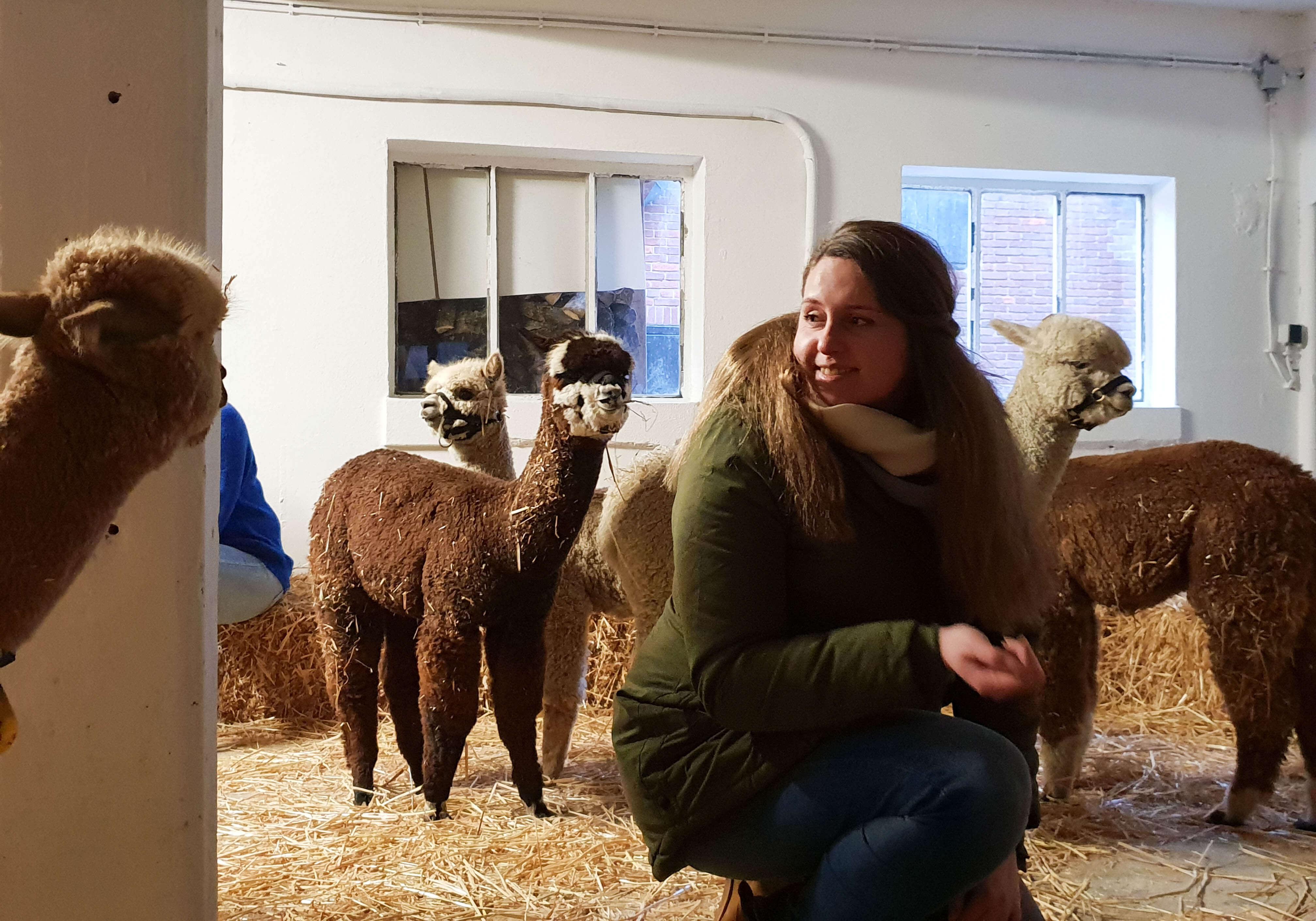 Offline mindfulness met alpaca's in Sassenheim