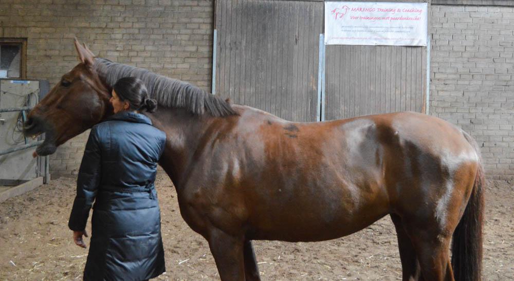 Persoonlijk coachingstraject met paarden