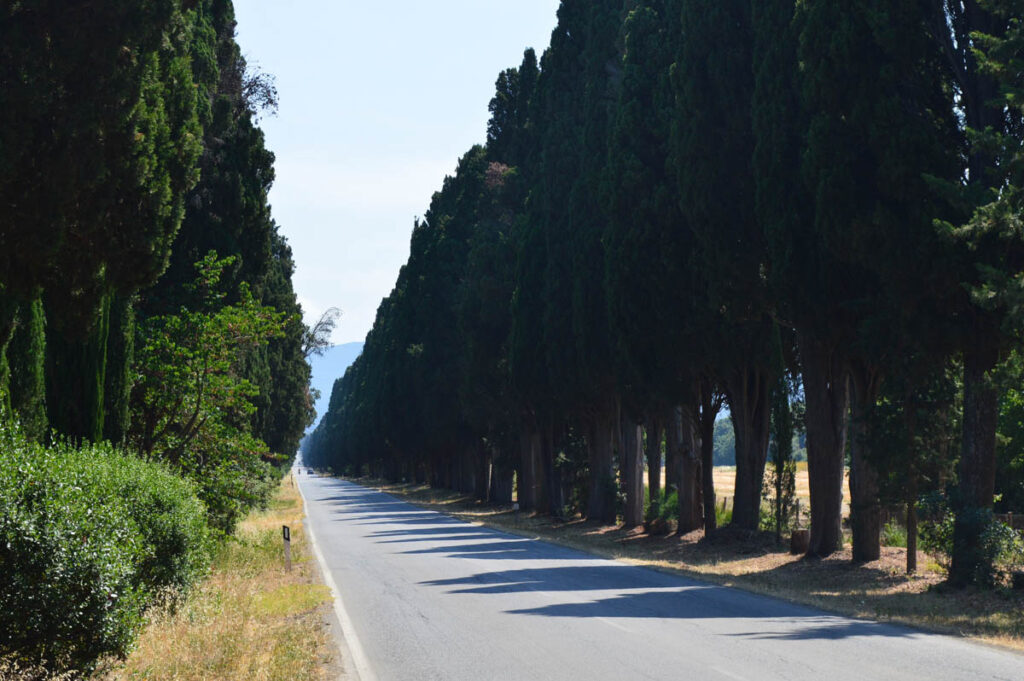 Lange rechte weg met aan weerszijden Cipressen - Bolgheri - Toscane
